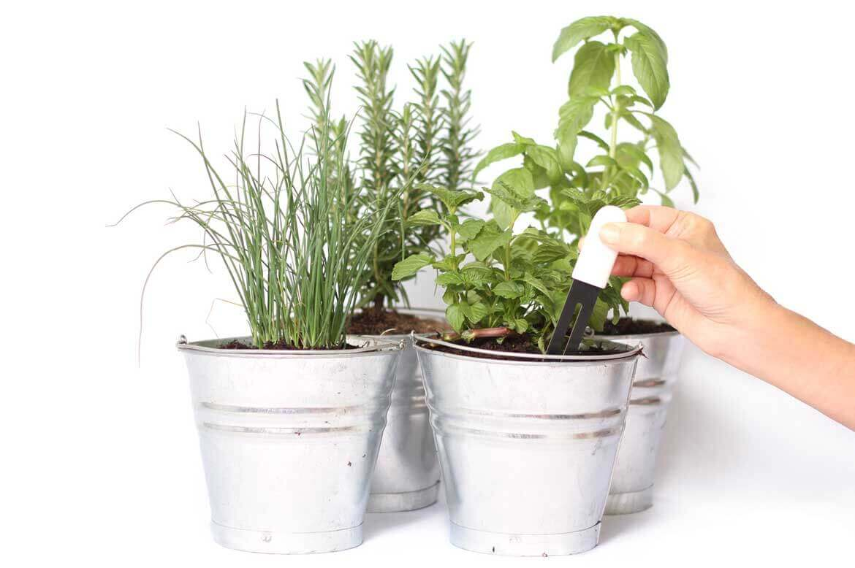 Insert Smart GReen Fingers Gadget into Plant Soil Moisture