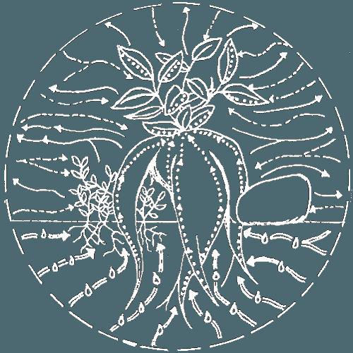 how do terrariums work photosynthesis